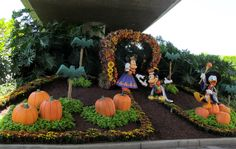 Leaving the Park at Disneyland... Mickey & Minnie in their Fall Attire!