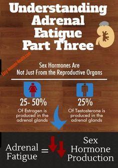 Understanding adrenal gland fatigue part 3. The adrenal glands produce sex hormones. http://www.easy-immune-health.com/adrenal-gland-fatigue.html