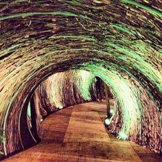 Tunel de ratán - Noticias de Arquitectura - Buscador de Arquitectura