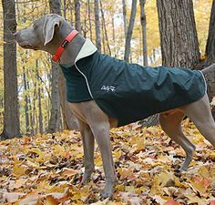 Chilly Dogs Trail Blazer. Quality fleece lined dog coat suited to the UK climate. Highly versatile and great for cool, windy or wet spring to autumn days.