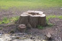Learn how to remove a tree stump with a few methods in this handy Garden Plants Guide.