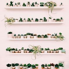 100 Beautiful DIY Pots And Container Gardening Ideas Plant Wall, Plant Decor, Cacti And Succulents, Cactus Plants, Indoor Garden, Indoor Plants, Gravel Garden, Hanging Plants, Air Plants