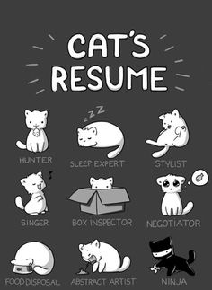 Cat's Resume of the Day - Cheezburger