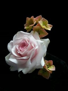 Sugar rose and hydrangeas.