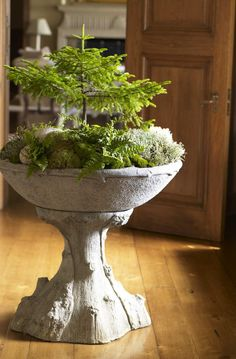 Forest in a planter