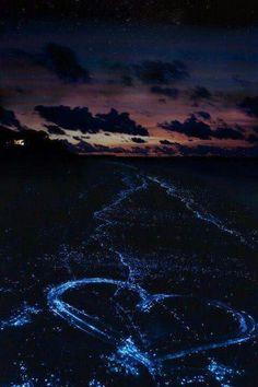 Dinoflagelados, playas de las islas Maldivas