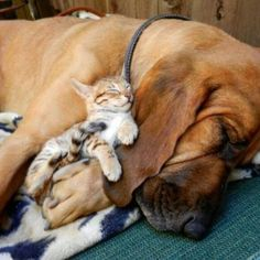 A dog and his kitty