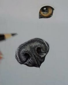 emilexcollin - 0 results for koi fish Realistic Animal Drawings, Cool Art Drawings, Pencil Art Drawings, Dog Drawings, Colored Pencil Artwork, Color Pencil Art, Dog Drawing Tutorial, Nose Drawing, Wow Art