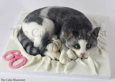 The Cake Illusionist® Birthday Cake For Cat, Unique Birthday Cakes, Beautiful Birthday Cakes, Kitten Cake, Kitten Party, Realistic Cakes, Meringue Cake, Cool Cake Designs, Sculpted Cakes