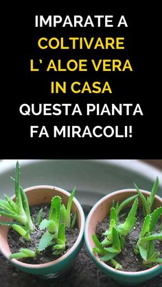when to plant vegetable garden Vegetable Garden For Beginners, Gardening For Beginners, Gardening Tips, Urban Gardening, Planting Vegetables, Growing Vegetables, Vegetable Gardening, Health And Nutrition, Health And Wellness
