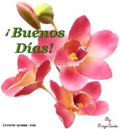 Hermosas flores rosas animadas para dar los Buenos Días
