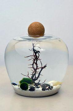 Marimo aquarium