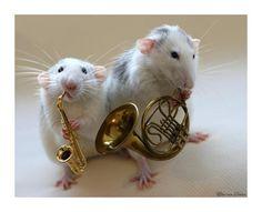 Rattie duet.