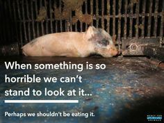 when something is so horrible we can't stand to look at it ... we shouldn't be eating it #vegan