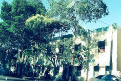 Houses - Park St Erskineville