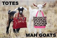 totes mah goats! bahahahahaha glad I'm not the only one who finds that line hilarious!