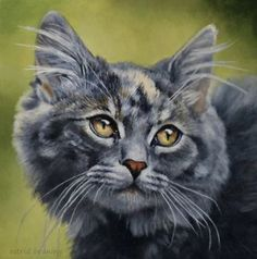 DeviantArt: More Collections Like Maine Coon by Keraani