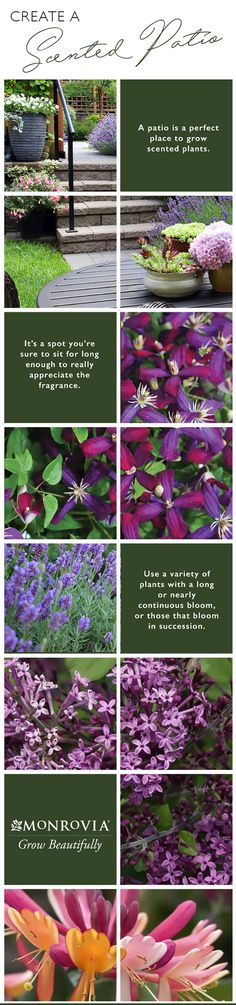 To get the most out of your perfumed patio, you'll want to use a variety of plants with a long or nearly continuous bloom, or those that bloom in succession throughout the season so there's always something scented the air. Go one step further by adding in a few plants that are especially fragrant at twilight and into the night.