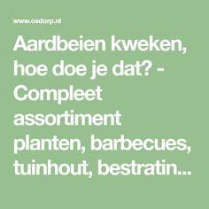 Aardbeien kweken, hoe doe je dat? - Compleet assortiment planten, barbecues, tuinhout, bestrating, tuinmeubelen, kado artikelen, tuinverlichting en meer voor huis & tuin in Amsterdam!