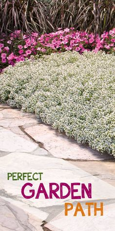 The secret to a perfect garden path? Lots and lots of low, flowering plants along the sides. Here you see Snow Princess (Alyssum Lobularia). Win $250 in flowers to make your garden pop with the Proven Winners Dream Garden Sweepstakes #ad