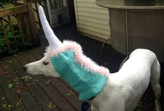 Unicorn Hat / Snood for a Greyhound -- I need one of these for Halloween...or just for the heck of it!