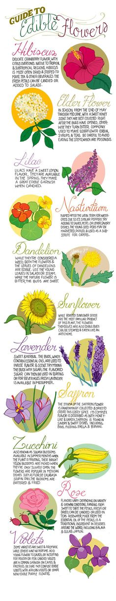 Plant a garden that's a treat for the nose, eyes, AND mouth with these edible flowers. | 23 Diagrams That Make Gardening So Much Easier