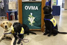 We will once again have the pleasure of having Canine Companions for Independence service dogs in training visiting our booth during the Oregon State Fair. Need your puppy fix? Come by our booth in the Jackman Long building (we are right next to the main entry door) this Saturday, 8/25 from 11 am - 2 pm, or next Wednesday, 8/29 from 11 am - 5 pm. On Wednesday, 8/29, at 2 pm, CCI volunteers will be doing a demonstration on the stage in our building to educate the public about their…