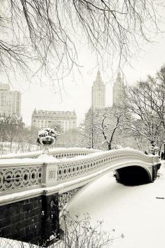 Beautiful! Central Park in winter