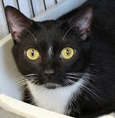 Figaro is available for adoption
