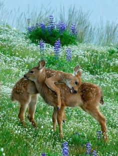 The very best of Rabbit Carrier's pins - i....... love you love..,,,,what a beautiful picture #CuteBabyAnimals