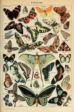 Vintage Butterfly Print, French Insect Chart Butterfly Illustration Biology Poster Wall Art Home Decor image 0 Illustration Papillon, Butterfly Illustration, Graphic Illustration, Graphic Art, Antique Illustration, Botanical Illustration, Collage Mural, Photo Wall Collage, Poster Collage