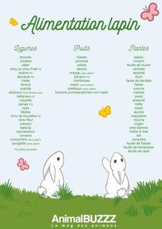Vos caresses, vos instants de complicités jouent sur le bien-être de votre lapin, mais en premier lieu, c'est son alimentation qui fait la différence.