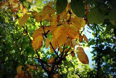 Autumn autumn autumn <3
