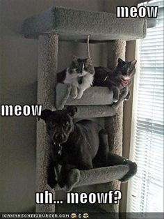 Funny Cats & Dogs that's awesome!