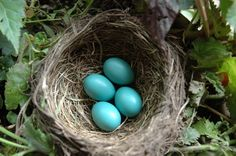 robin's eggs: love this color