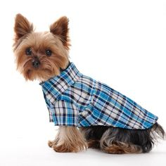 CheePet Spring Summer Pet Puppy Doggie Clothes « Pet Lovers Ads