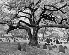 Google Image Result for http://www.historytrekkershoppe.com/Other/8-x-10/i-7KTZS7k/0/M/Salems-Old-Burial-Ground-M.jpg