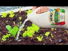 식초를 식물에 뿌려 낸다! 잠시 후 무엇이 일어날 지 보아주세요! (Ranking World) - YouTube