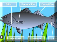 """Science Labeling Game Choose """"Anatomy of a Fish"""""""