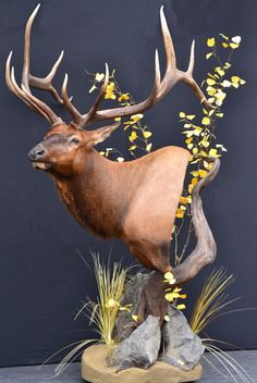 Taxidermy--love how this is put together !!