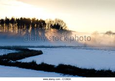 Dramatic sun shafting light through copse of conifer trees in midwinter snow at Threave Estate Galloway - Stock Image