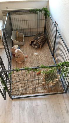 Indoor Rabbit House, Indoor Rabbit Cage, House Rabbit, Rabbit Hutch Indoor, Diy Bunny Cage, Bunny Cages, Rabbit Cages, Cages For Rabbits, Rabbit Cage Diy