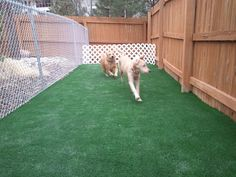 Dani : a nice dog run for Jacobs hairy stinkie brother & sister LOL! Fake grass! @ costco partition off yard and make shade cover, rock along fence line on right
