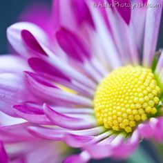 Popping purple mum with bright yellow center by AulaniPhotography, $7.00 Perfect to add to your home decor; handmade and listed on Etsy.