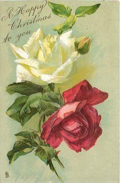 A FELIZ NAVIDAD una blanca y una rosa roja, fondo verde