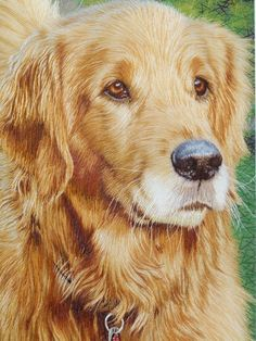 Look at this Golden Retriever by Silpen, 100% hand embroidered, not a picture or painting!!!