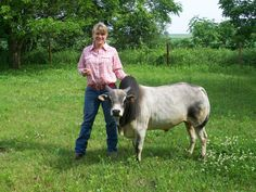 Mini Cow (Zebu) will have one of these, too