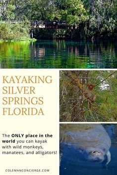 Silver Springs State Park in Florida is one of the largest artisan springs ever discovered and the only place in America you can see manatees and wild monkeys on the same trip. There is no other paddling experience quite like Silver Springs. Usa Travel Guide, Travel Usa, Travel Guides, Travel Tips, Budget Travel, Beautiful Places In Usa, Canada Destinations, Florida Springs, Places In America