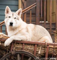 Rollo - Season 4 Outlander