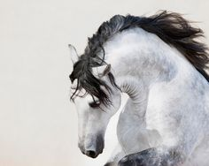 I once dreamed of a horse like this. His name was Valkyrie
